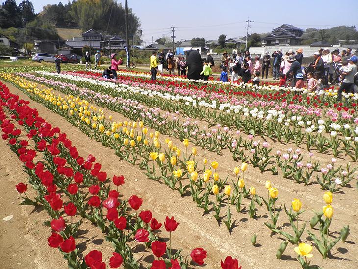 2年目の「被災地に花を咲かせよう」プロジェクト(本渡RC)