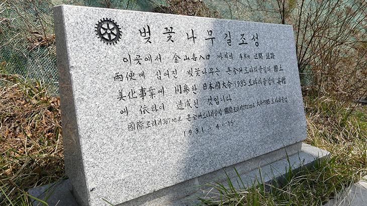 20数年ぶりに桜の花道を訪問(大分1985RC)